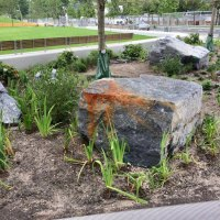 Accenting the common lawn alongside Bloomberg are the stuff Roosevelt Island is made from: Manhattan schist.