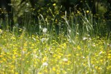 Springtime Brings Pollen and Hay Fever