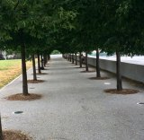 July 18th, Photo Walk with Street Dreams Magazine, FDR Four Freedoms Park