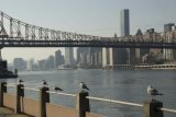 Roosevelt Island View Along the East River Waterfront