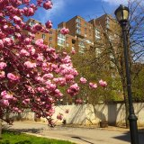 Westview, Springtime, Better Days With Cherry Blossoms