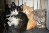<p>The nonprofit Flatbush Cats helps to tame the population of feral felines through the trap-neuter-return (TNR) method. | Courtesy of Flatbush Cats</p>