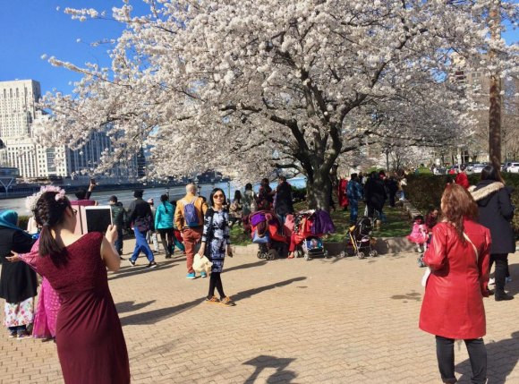 Perfect timing for blossoms and gorgeous weather brought visitors flocking to the 2018 Cherry Blossom Festival.