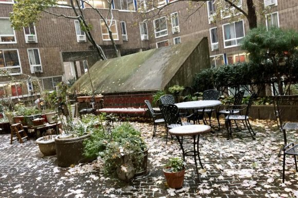 Last year's first snow, November 15th, in the Senior Center garden.