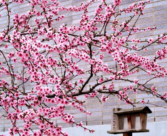New York PAUSE ironically decorated with blossoms and other spring openings.