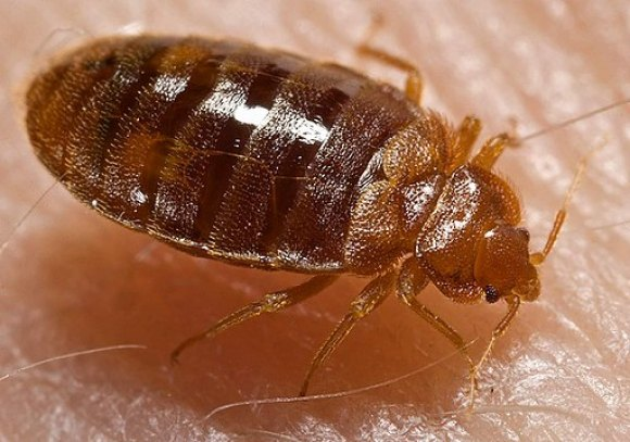 October 1st, Learn What You Can Do To Stop Bed Bug Invasions, CBN/RI Senior Center