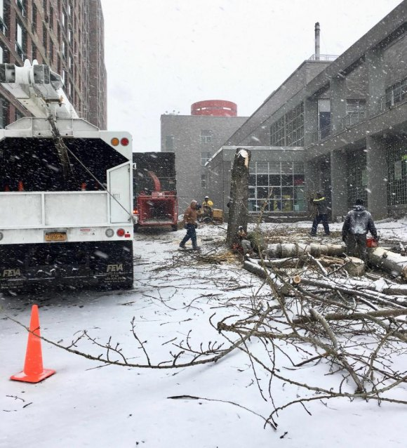 PS/IS scheduled removal of the trees for a snowy, Saturday morning.