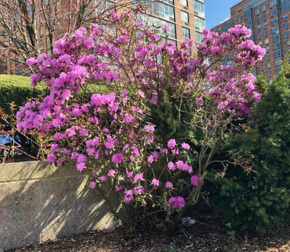 April 2020 on Roosevelt Island: Fresh breaths of life matched times of loss and sorrow.