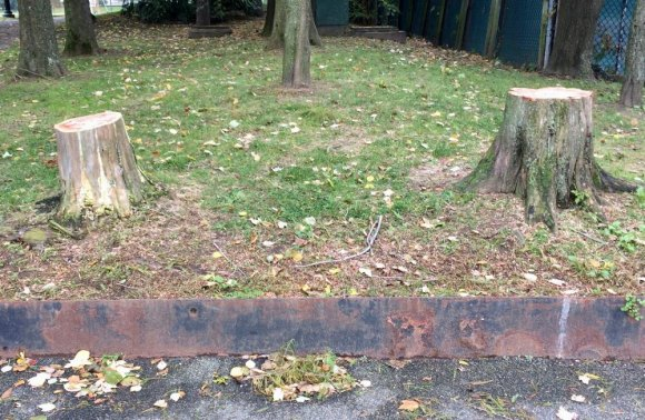 The latest abandoned tree stumps, at Octagon Field
