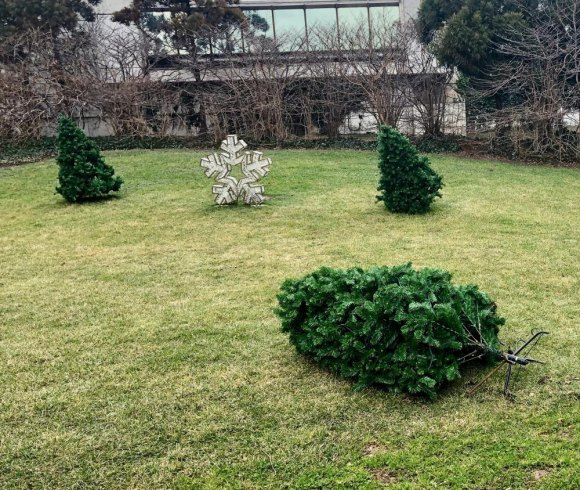 The artificial tree on the right has been relaxing for a couple of weeks, its partners preparing to follow suit.