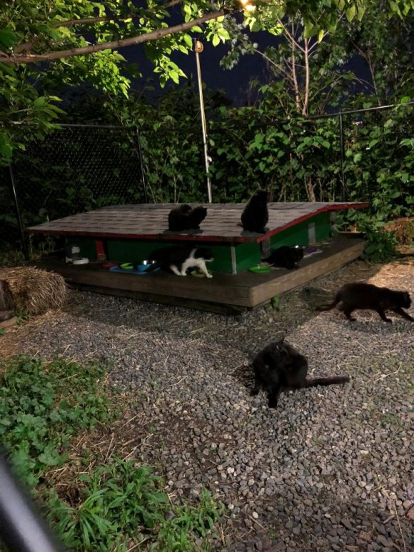 Thriving feral cat rescues include a crew of gorgeous, lucky black cats.