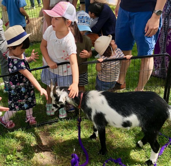 Kids get friendly with a willing goat at the petting zoo.