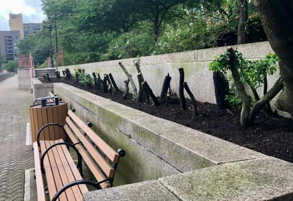 RIOC's unapologetic, tone deaf defoliation of Roosevelt Island continued aggressively this summer. Conversations with residents seen as interference.