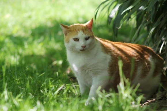 Cats At Risk As RIOC Shuts Off Water at Southpoint Sanctuary