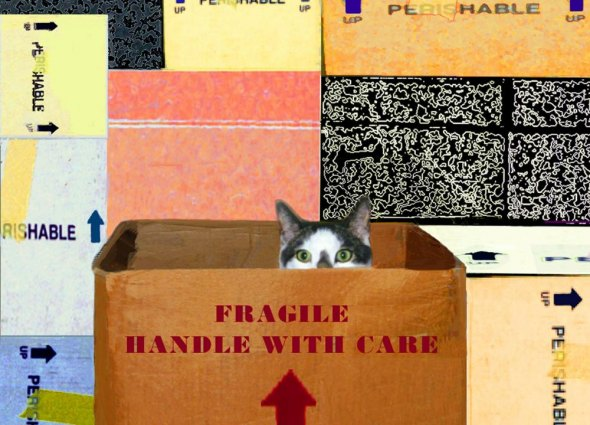 Handle With Care Cat Art
