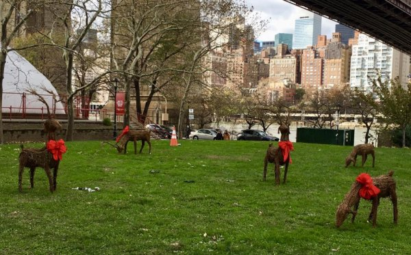 Clearly, the reindeer herd thinned out on the way to Roosevelt Island